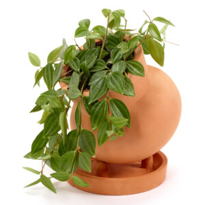 pot plante ceramique serax